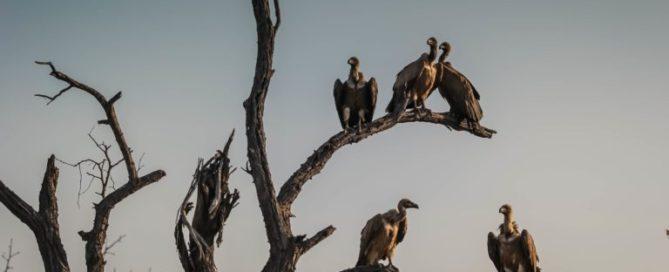 vultures-1081751-768x512