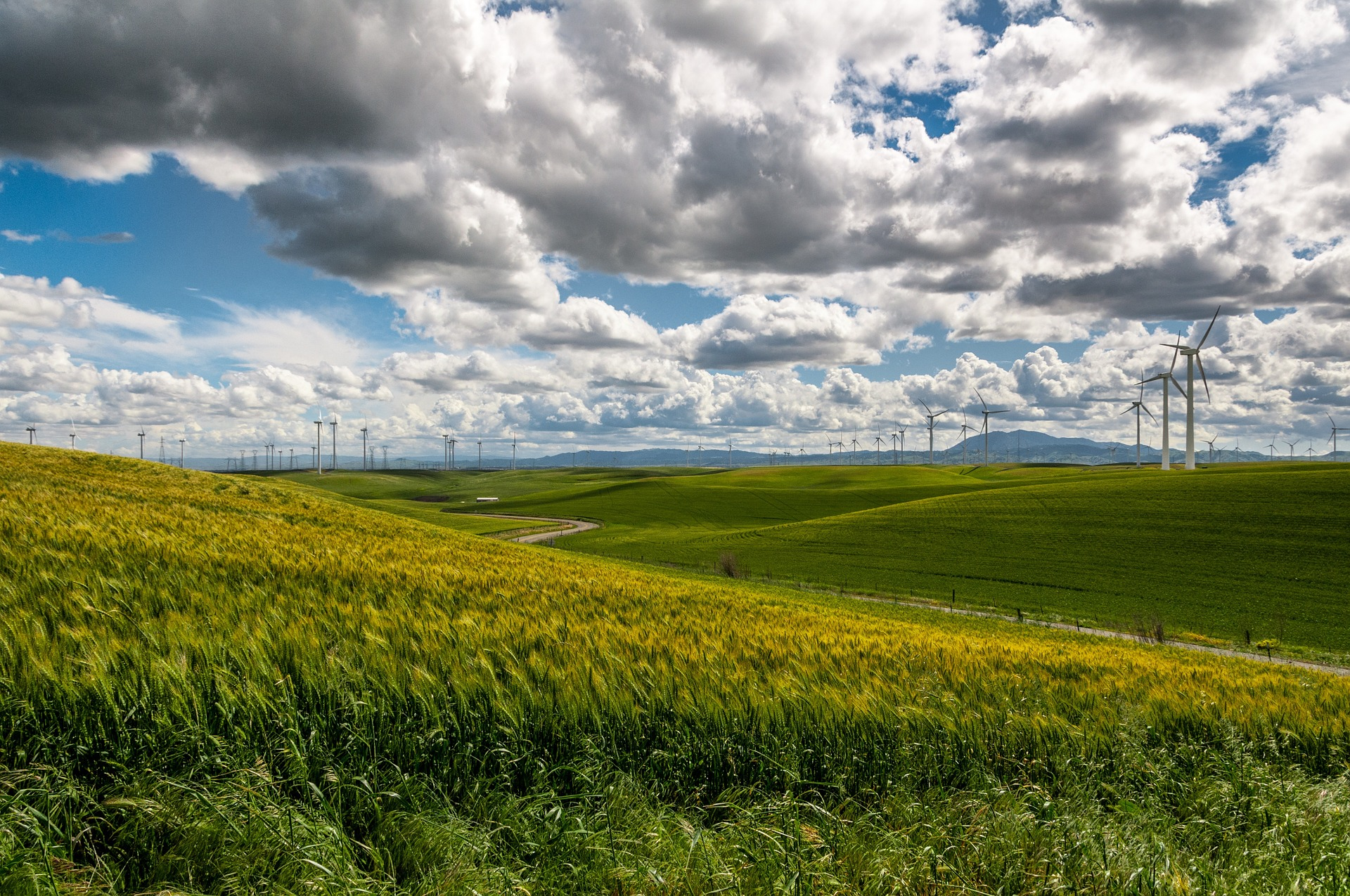 A green field with wind turbines in the background